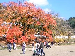 閑谷学校櫂の木